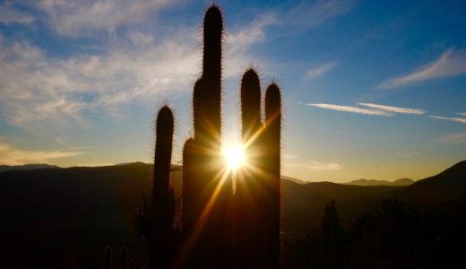 【Cacti】シェルスクリプトで使用する